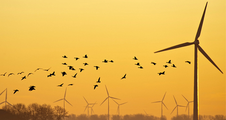 Wind turbines at sunset with flying birds