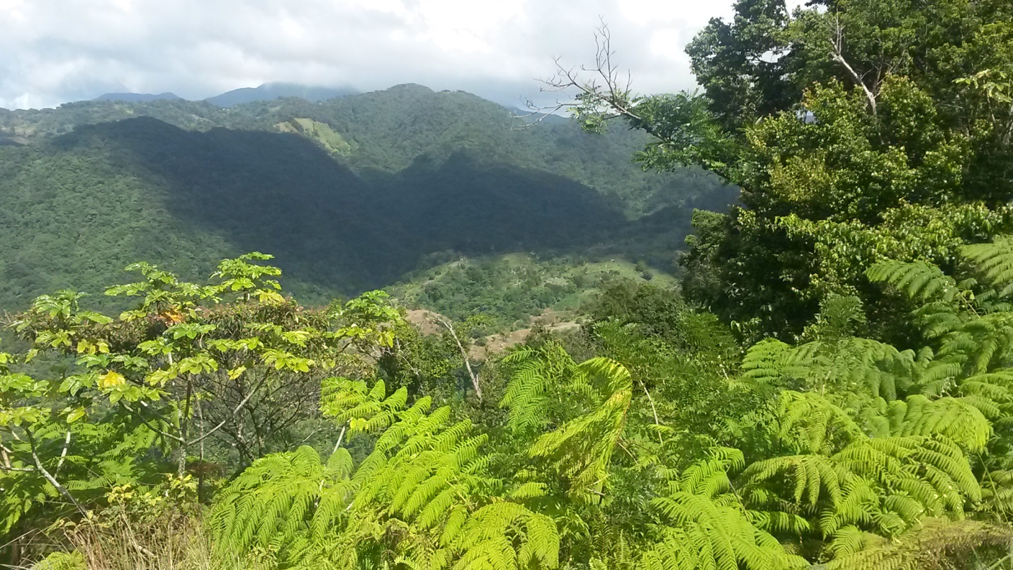 Dominica 10